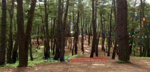 Hutan Puncak Sorombipi Koltim